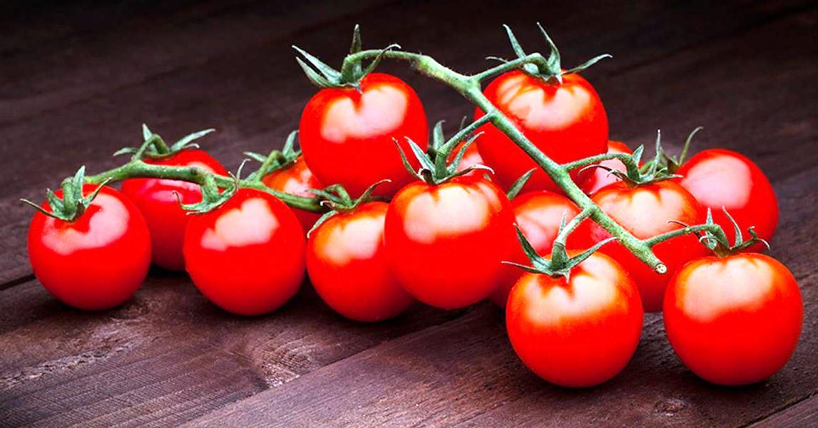 Приготовление рассад помидоров для консервной промышленности
